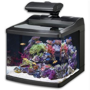 Oceanic Biocube