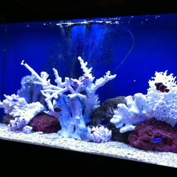 Aquarium shine saltwater aquariums rochester michigan for Saltwater fish tank kit