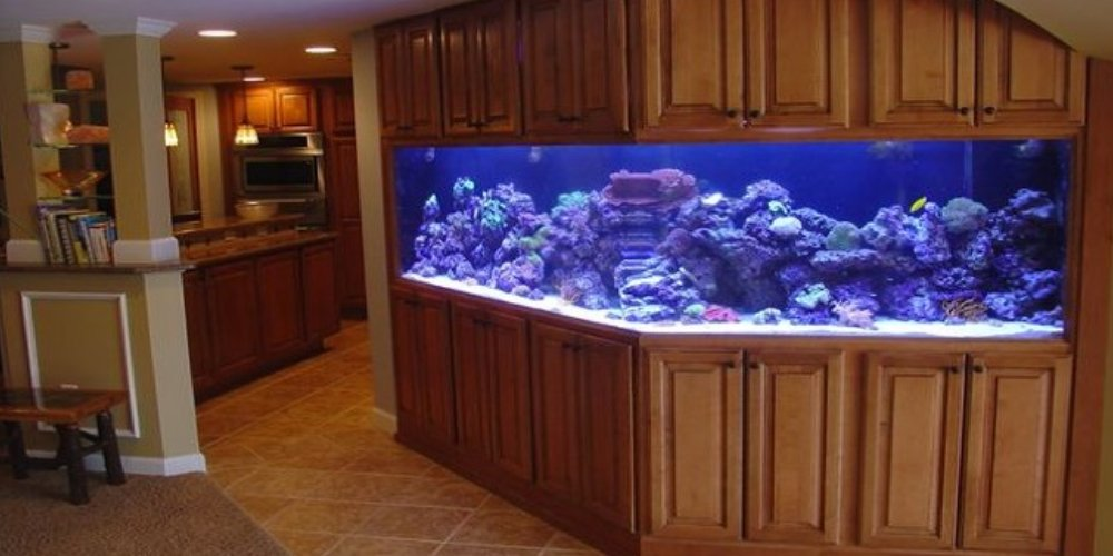 Aquarium Shine Fish Tanks Rochester Hills Michigan